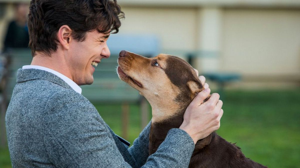 dogswayhome_20181223191419