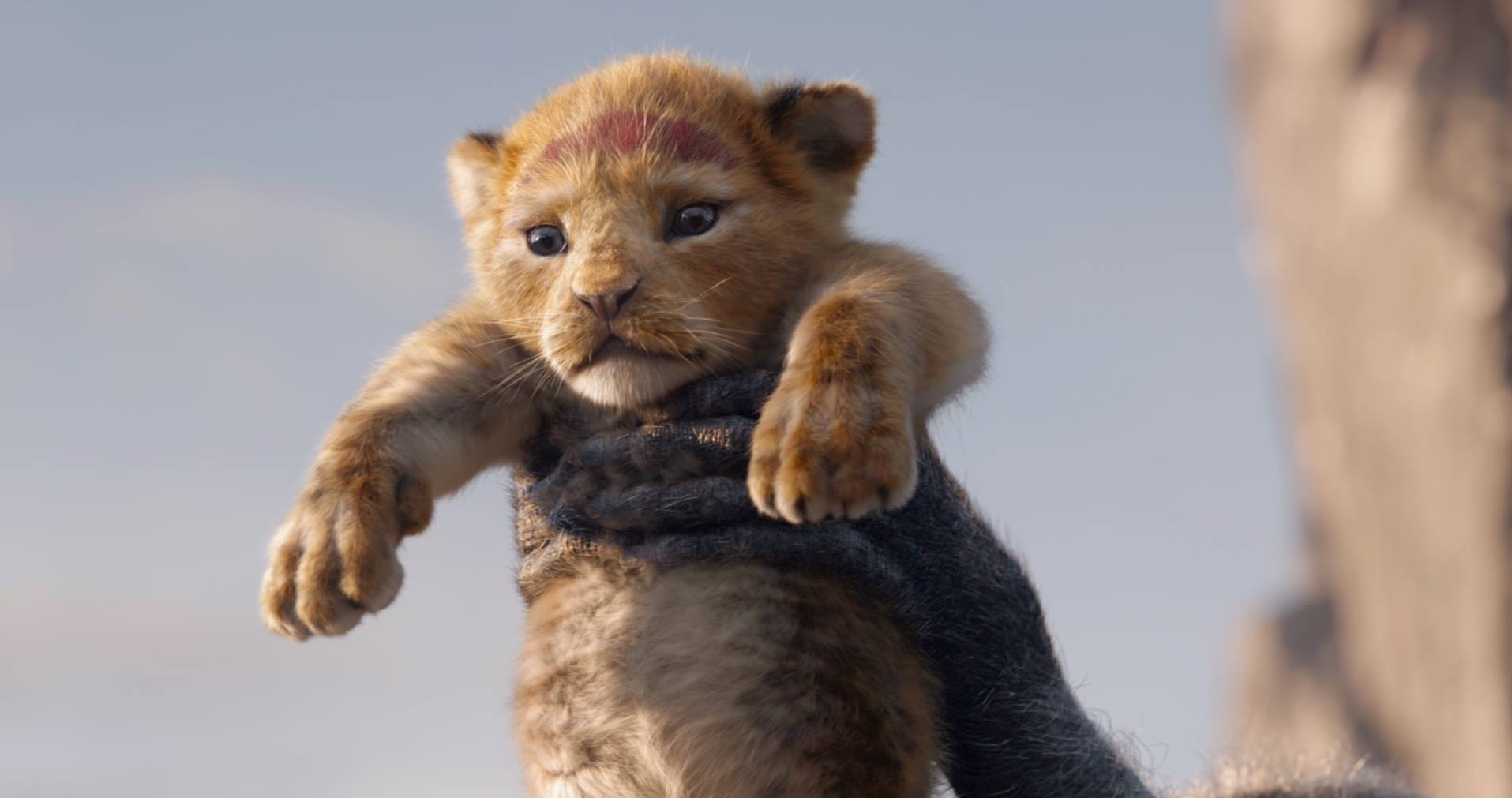 VOH-The-Lion-King-2019-1