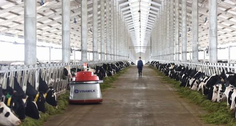 nuôi bò công nghệ cao