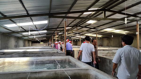 Nông dân TP.HCM học tập mô hình sản xuất tại tỉnh Khánh Hòa