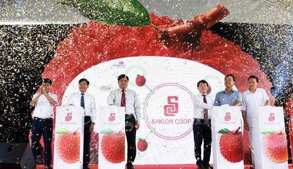 500 tấn vải Lục Ngạn (Bắc Giang) và Thanh Hà (Hải Dương) phân phối ở các kênh siêu thị