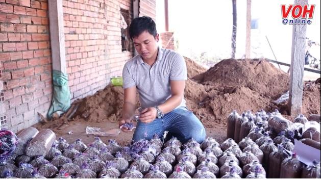 Bùi Minh Thắng hiện thực hóa giấc mơ làm giàu từ nấm sạch.