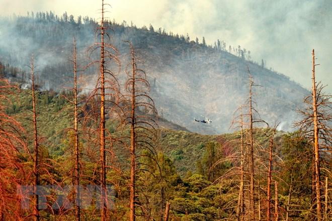 cháy rừng, California