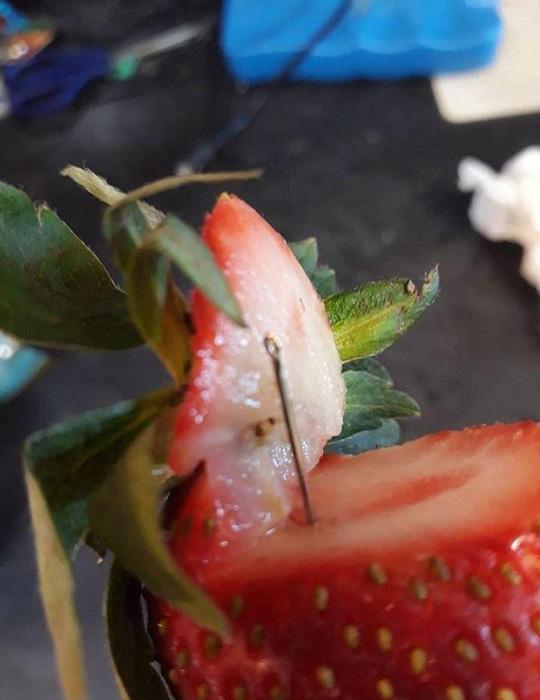 New Zealand, Kim khâu trong dâu tây