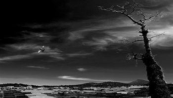Hướng dẫn xem ảnh: Phần 3 - Thế nào là một tác phẩmnhiếp ảnh