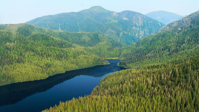 Rừng cây trên 800 tuổi: Theo trang American Forest, Rừng quốc gia Tongass, Alaska, Mỹ, với diện tích 68.000 km2 là khu rừng lớn nhất nước Mỹ. Tuy nhiên 40% diện tích Tongass là vùng đầm lầy, băng, đá và khu khu phi lâm nghiệp, chỉ có khoảng 40.000 km2 là rừng. Đây cũng là rừng mưa ôn đới ven biển lớn nhất thế giới còn nguyên vẹn đến ngày nay với rất nhiều cây trong rừng ước tính từ 800-1.000 tuổi. Vườn quốc gia này được lập những năm đầu thế kỷ 20 nhằm bảo tồn hệ sinh thái phong phú bậc nhất nước Mỹ.