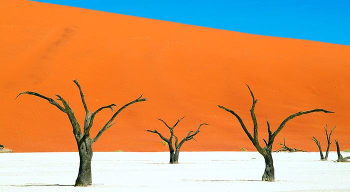 """""""Rừng chết"""": Theo trang MNN, rừng Deadvlei, Namibia trước kia từng là một vùng đầm lầy nhưng cách đây khoảng 900 năm vùng đất này bắt đầu khô cứng sau khi những những cồn cát ngăn chúng với nguồn nước sông Tsauchab. Cây cỏ sống ở đầm lầy chết dần nhưng sau hàng thế kỷ chúng vẫn chưa bị phân hủy vì điều kiện vô cùng khô hạn. Nhờ đó ngày nay thế giới có một địa điểm kỳ diệu khi những thân cây có tuổi thọ hơn 1.000 tuổi vẫn đứng sừng sững trên một lớp đất sét trắng, bao quanh là những cồn cát vàng cháy nắng. Trong tiếng Afrikanns, Deadvlei có nghĩa là đầm lầy chết."""