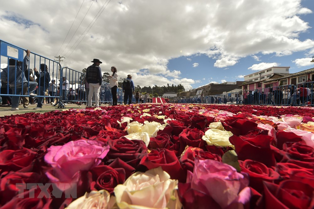 Du khách ngắm Kim tự tháp làm từ hoa hồng tại thị trấn Tabacundo. (Ảnh: AFP/TTXVN)