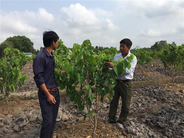 Thí điểm HTX Nông nghiệp Công nghệ cao Tân Thành, huyện Thủ Thừa, Long An